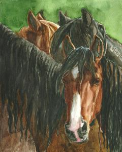 Wild Horses Of America Watercolor Exhibit To Open September 1